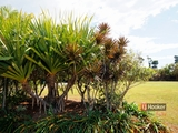 26 Rise Crescent Mission Beach, QLD 4852