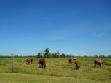102 Miller Road Bilyana, QLD 4854